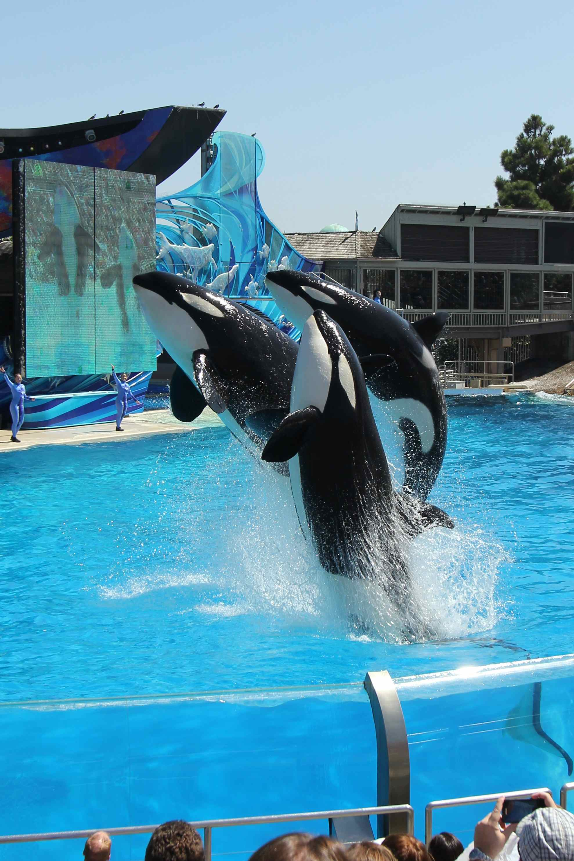 The Orcas at Sea World
