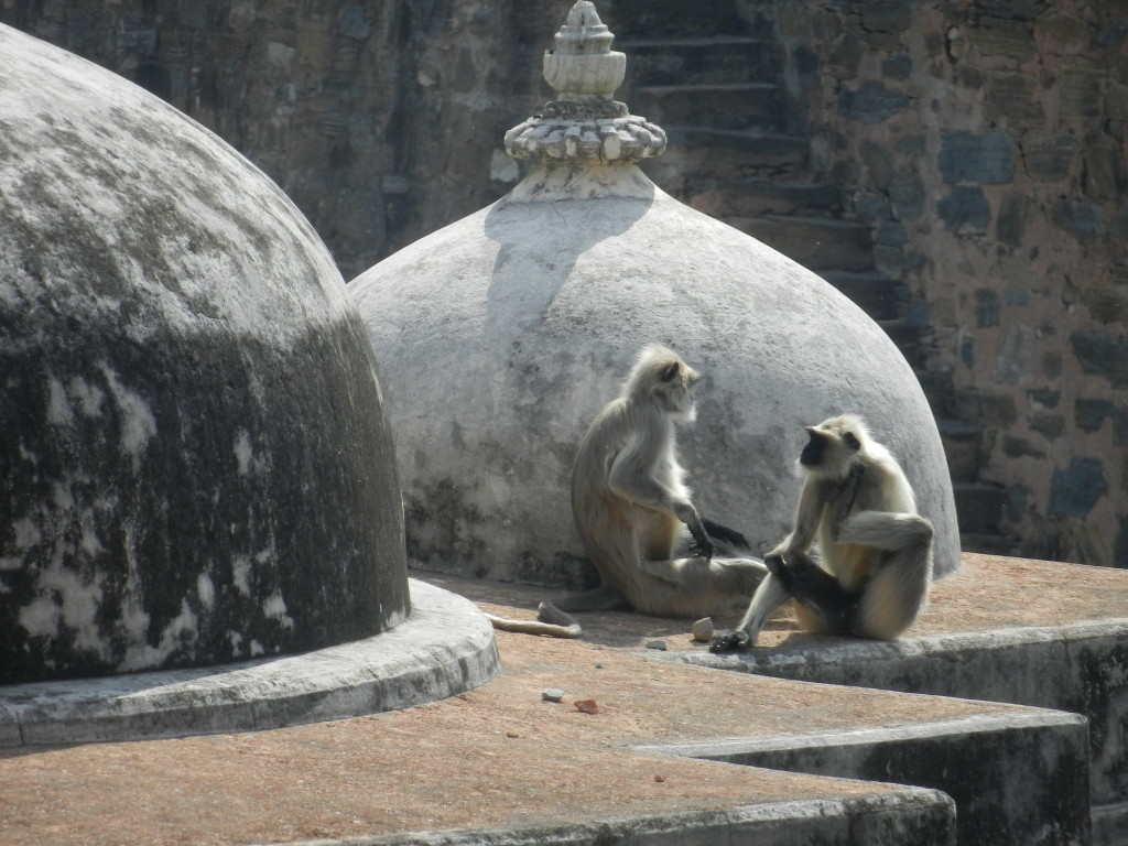 Monkeys basking on the ramparts of the Kumbhalgarh fort at Rnakpur.