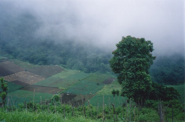 The tree-covered slopes of Santa Maria.