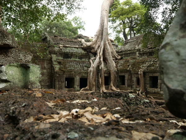 Get some alone time at Ta Prohm and imagine yourself in an adventure story.
