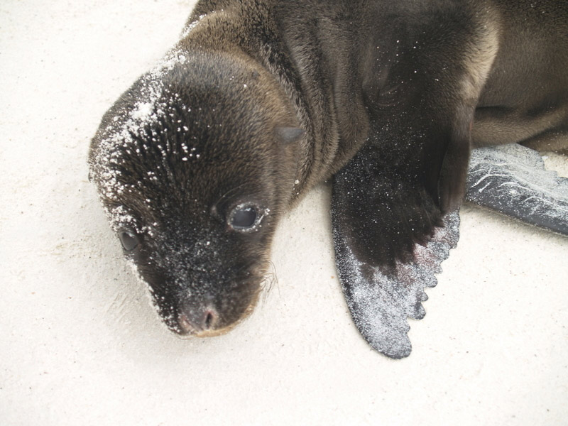 Baby sea lion on beach