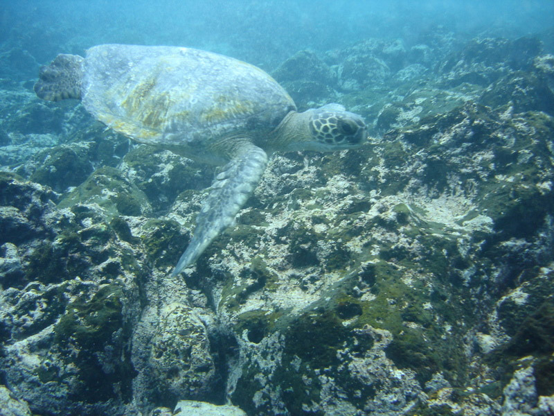 Galapagos life is fascinating underwater as well as on land.